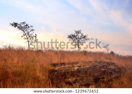 Landscape with grass Plant and Rock #1239672652