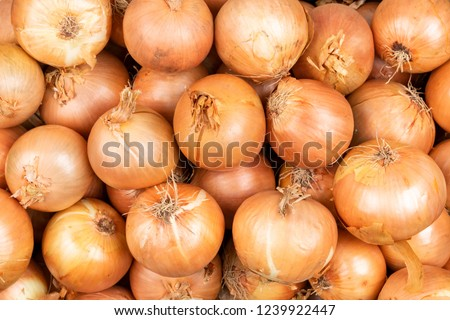 fresh onions. Onions background. Ripe onions. Onions in market #1239922447