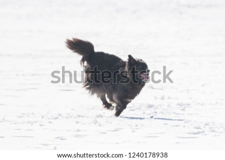 Games of dogs in the park in the winter #1240178938