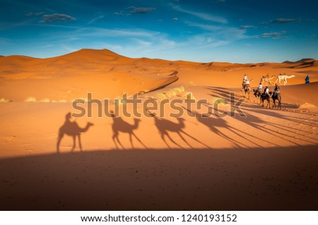 camels trekking guided tours in Merzouga Morocco Sahara desert #1240193152