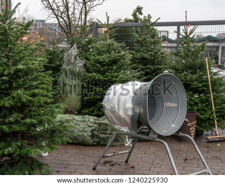 Christmas trees in pots for sale #1240225930