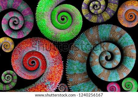 Beautiful color chameleon tails, chameleon tails #1240256167