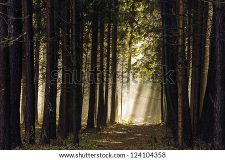 Sun beams pour through trees in foggy forest #124104358