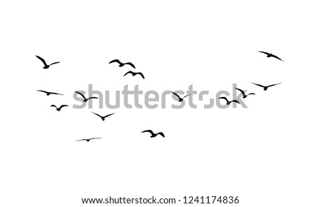 A Flock of Flying Birds. Vector Royalty-Free Stock Photo #1241174836