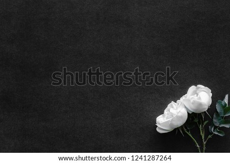 Fresh, white roses on black, dark background. Condolence card. Empty place for emotional, sentimental text, quote or sayings. Top view. Flat lay.