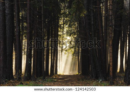 Sun rays crossing a misty forest photographed in an early autumn morning - the way to heaven #124142503