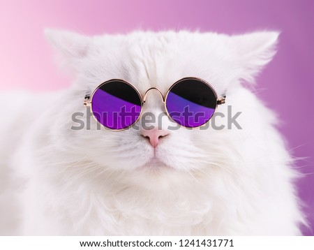 Close portrait of white furry cat in fashion sunglasses. Studio photo. Luxurious domestic kitty in glasses poses on pink background wall Royalty-Free Stock Photo #1241431771