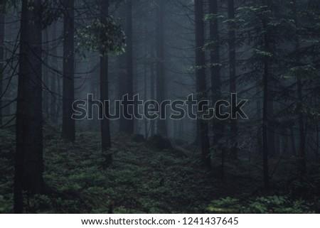 Dark forest with fog. Taken in Beskidy mountain, Poland.