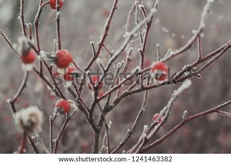 Frozen berries in winter #1241463382