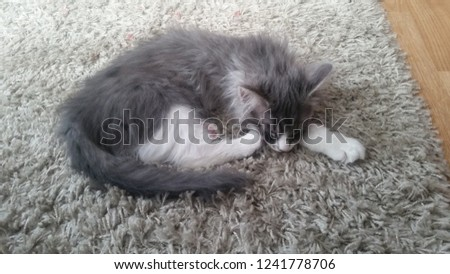 Norwegian long hair kitten #1241778706