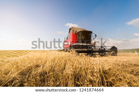 Harvesting of wheat fields with combine #1241874664