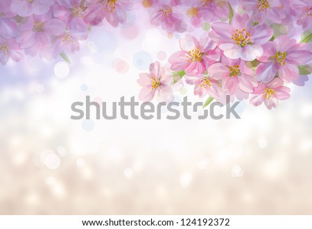 Spring blossoming tree.