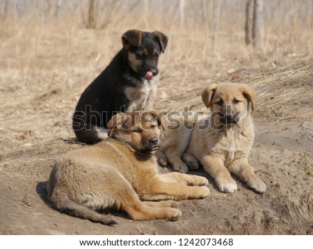 A dog and puppy in grass at forest #1242073468