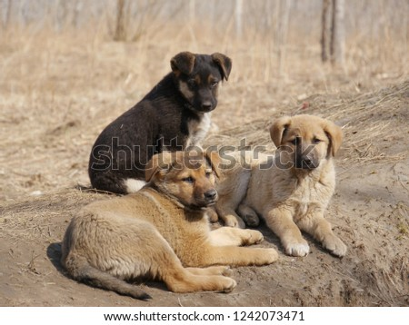 A dog and puppy in grass at forest #1242073471