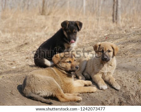 A dog and puppy in grass at forest #1242073477