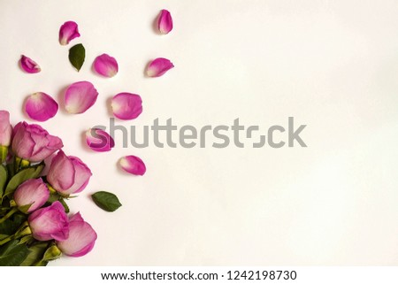Pink roses and rose petals on white background. #1242198730