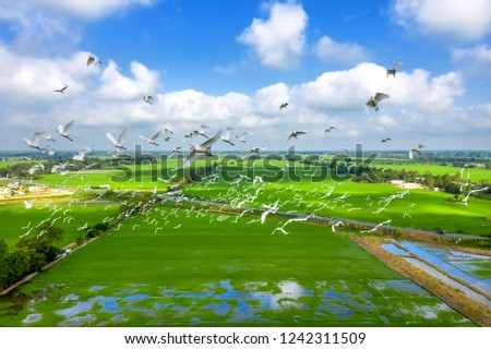 Royalty high quality free stock image aerial view of Melaleuca forests, Tram Chim National Parks, Dong Thap, Vietnam. Flying birds in the sky