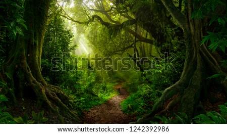 Asian tropical rainforest #1242392986