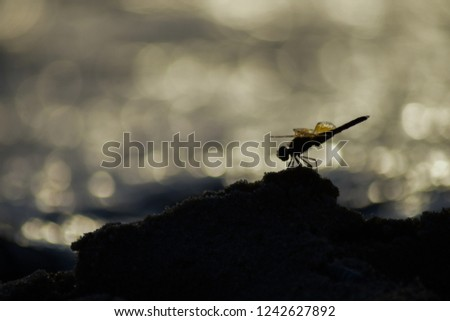 Golden dragonfly and bokeh background. #1242627892