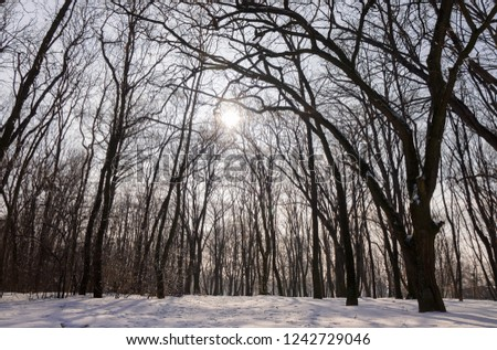 Forest under snow on a sunny day, note shallow depth of field #1242729046