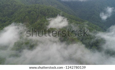 Aerial view of mountains covered forest, trees in clouds and fog. Cordillera region. Luzon, Philippines. Slopes of mountains with evergreen vegetation. Mountainous tropical landscape. #1242780139