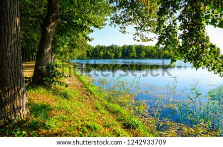 Forest river trees view. Forest river shore scene. Green forest river shore. Forest river trees scene #1242933709