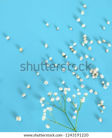 White little flowers on blue background. #1243191220