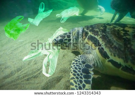 Sea Turtle eat plastic bag ocean pollution concept Royalty-Free Stock Photo #1243314343