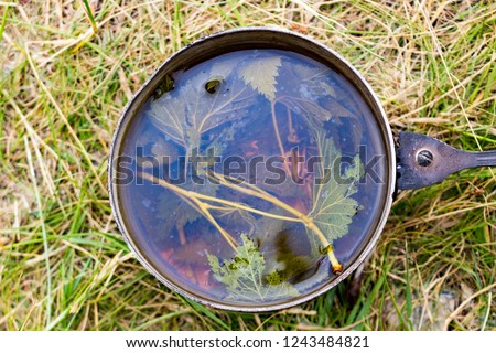 Fragrant delicious forest tea or a decoction or infusion of leaves of wild black currant is cooked in a smoked metal mug on a campfire in a summer hike. Summer hiking background #1243484821