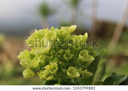 green flowers blooming nature and fresh  #1243799881