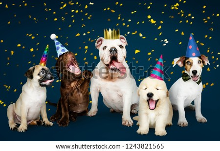 Group of puppies celebrating a new year #1243821565