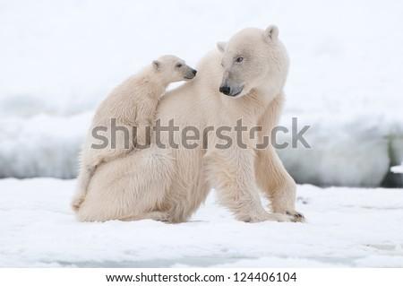 Polar bear with cub Royalty-Free Stock Photo #124406104
