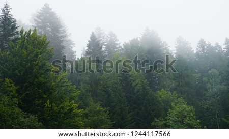 The fir-tree forest in the fog for dramatic background. #1244117566
