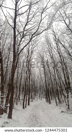 Winter forest in the cloudy afternoon #1244475301