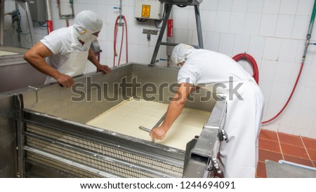 Zuleta, Imbabura / Ecuador - November 9 2018: Worker cutting blocks of compacted whey in a tank inside a cheese factory. Cheese manufacturing process #1244694091