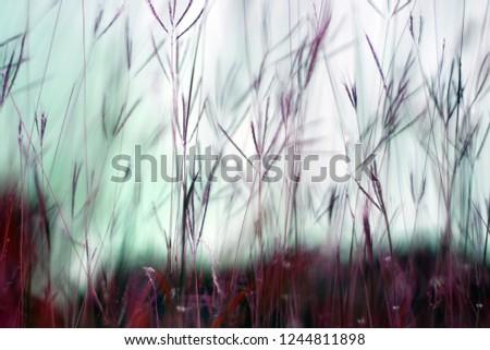 Dry grass background. #1244811898