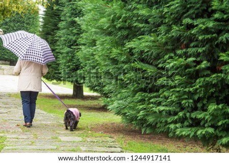 dog and owner with umbrella walking in the rain #1244917141