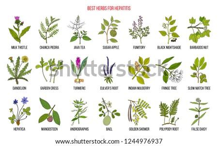Best herbal remedies for hepatitis. Hand drawn set of medicinal herbs #1244976937