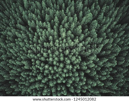 Green Forest. Pine Trees At Woodland From Aerial View. Beautiful Nature Landscape Of Woods Royalty-Free Stock Photo #1245012082