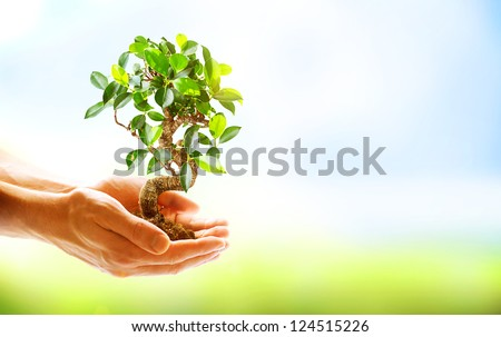 Human Hands Holding Green Plant Over Nature Background. Environment. Ecology Concept #124515226