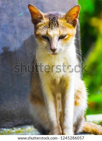 cute cat, #1245286057