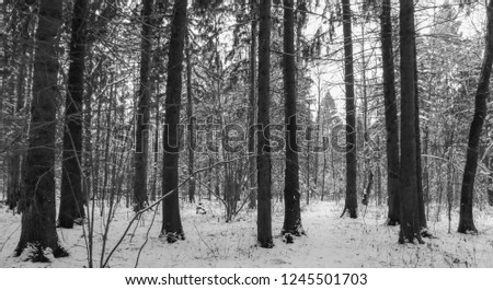 New Year forest in black and white #1245501703