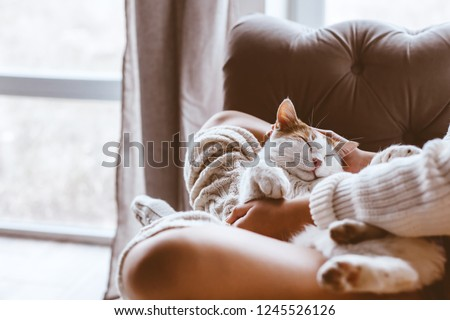 Cute cat sleeping on owners's hands one winter day. Girl relaxing with her pet on a sofa. Cosy scene, hygge concept. #1245526126