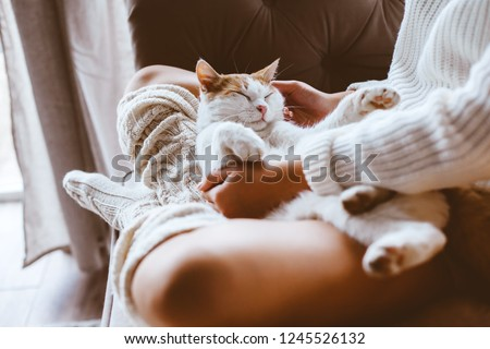 Cute cat sleeping on owners's hands one winter day. Girl relaxing with her pet on a sofa. Cosy scene, hygge concept. #1245526132