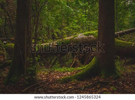 Bialowieza Forest, Poland #1245865324