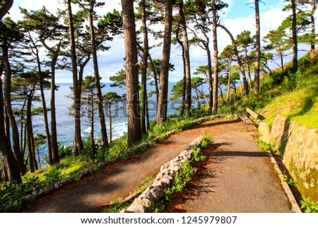 Scene from the hilly coastal park in San Sebastian, Spain - declining sun creating shadows of pine trees with a blue sea on the background #1245979807
