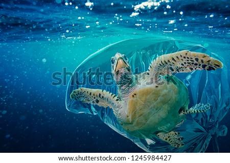 Sea turtle (Caretta caretta) trapped in a plastic bag. Pollution in oceans concept. #1245984427