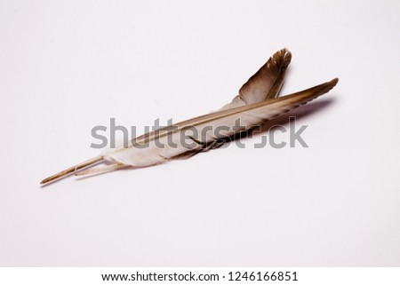 bird feather light background #1246166851