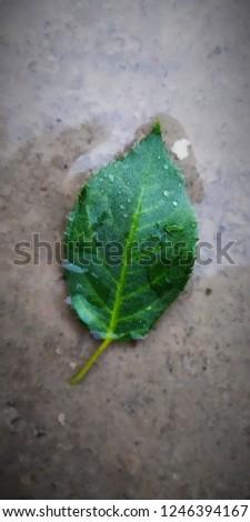 beautiful leaf photo #1246394167