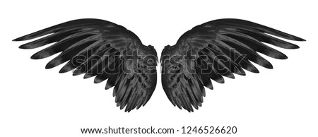 black wings of bird on white background Royalty-Free Stock Photo #1246526620
